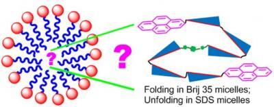 2012_JOC_folding in micelle