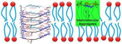2012_Langmuir_Aggregation in membrane
