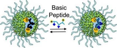 2017_ChemMater_Basic Peptide