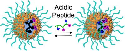 2017_MINPs for acidic peptides