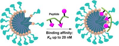 2017_Peptide-binding MINPs