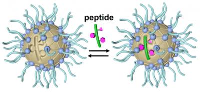 2020_ACSAPM_peptide