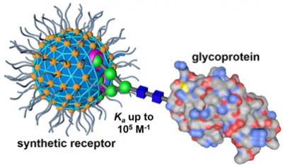 2020_CC_glycoprotein